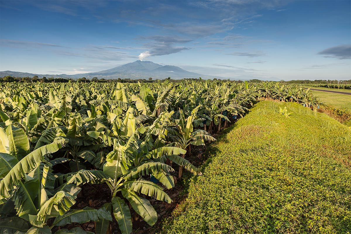 Chiquita land Sustainability