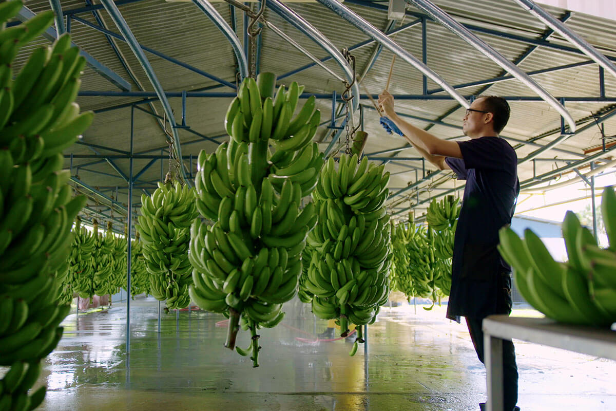Chiquita has established an innovation facility to fund scientific efforts.