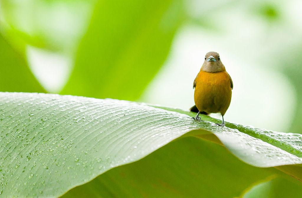 Preserving Biodiversity Chiquita