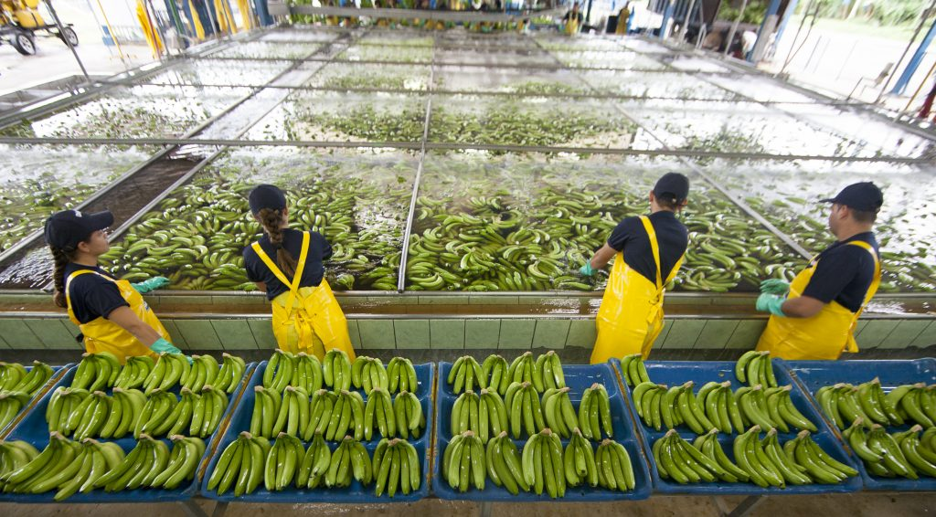 Chiquita Packing Station