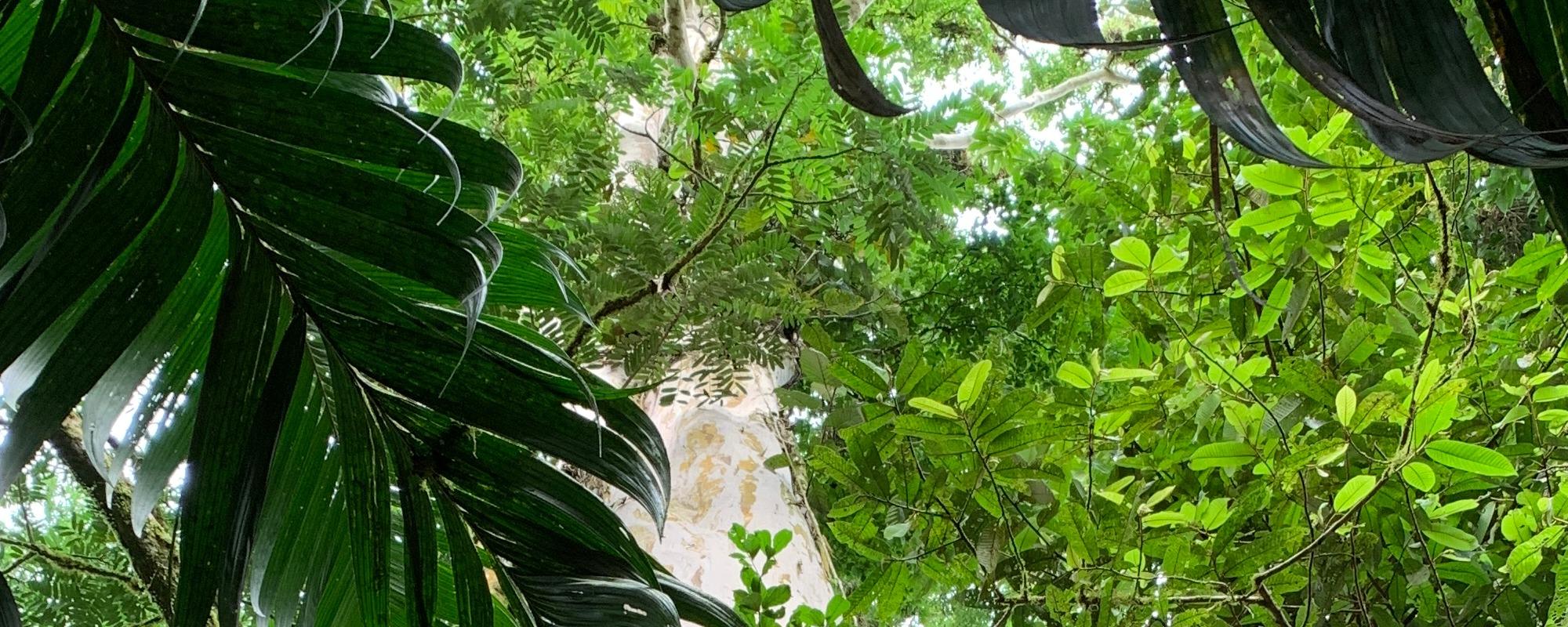 nogal reserve Chiquita Costa Rica