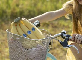 Chiquita bananas in a cycle basket on a summer trip