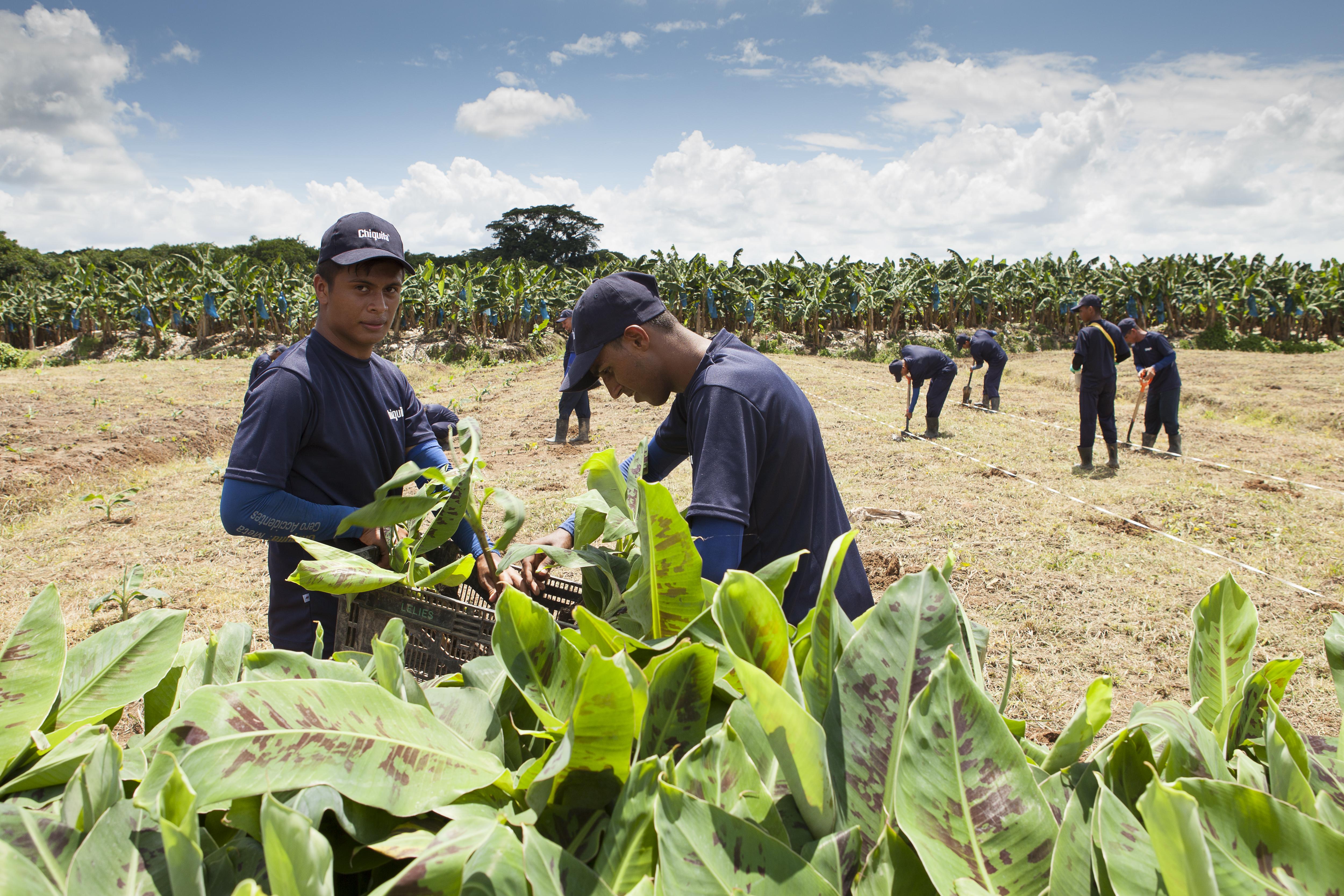 Chiquita Sustainable Agriculture Farm Rejuvenation